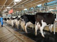 جهة الرباط-سلا-القنيطرة تراهن على إنتاج 600 مليون لتر من الحليب في أفق 2030