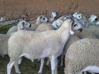 عيد الأضحى 1442 مر في ظروف جيدة على مستوى الجودة والصحة الحيوانية