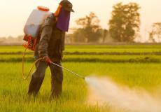 المكتب الوطني للسلامة الصحية للمنتجات الغذائية يعيد تقييم التراخيص الممنوحة للمبيدات الزراعية بانتظام