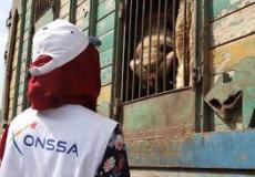 أونسا: عيد الأضحى مر في ظروف صحية جيدة على مستوى الجودة الحيوانية