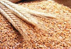 إعانة جزافية وتحديد السعر المرجعي للقنطار... تدابير تحفيزية لتسويق المنتوج الوطني من الحبوب